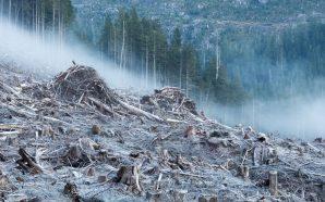 Anthropocene: Dünya İçin Son Uyarılar